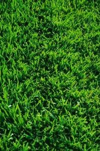 Kurzer Rasen mit dem Akkumäher